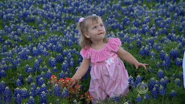 Field of bluebonnet flowers in Austin, Texas on April 12, 2012.