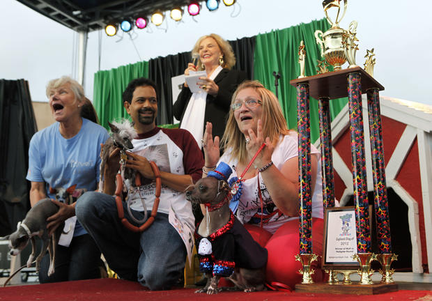World's ugliest dogs compete for title