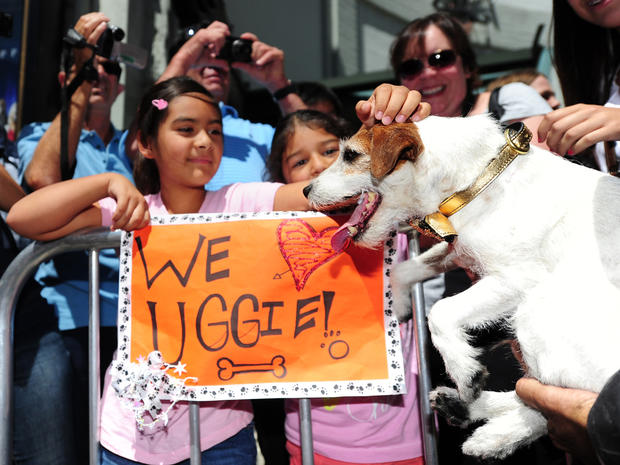 Uggie's paw prints cemented in Hollywood