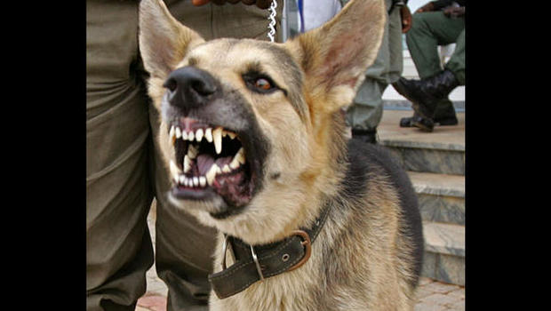 Taunted A Police Dog By Barking