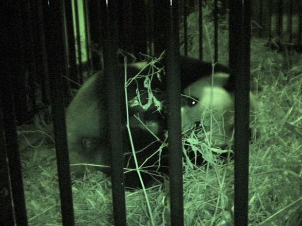 First panda born at Tokyo zoo since 1988