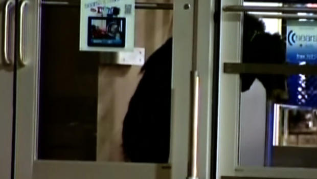 Bear trapped in a Sears store