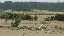 Sand-covered farmland