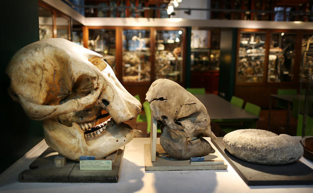 Zoology museum's weird collection