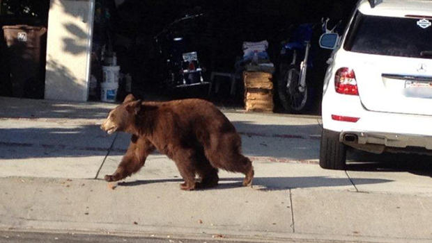 Montrose_bear.jpg