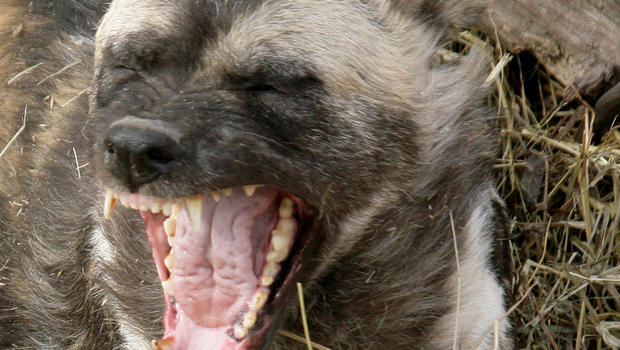 Sunday's African dogs death not first incident at ...