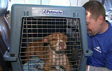 Pets rescued from shelters left powerless by Sandy