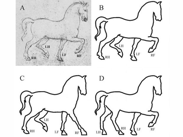 A sketch by Leonardo da Vinci (A) shows improper foot placement (B). Images C and D show how the image could be corrected to show the horse walking correctly.