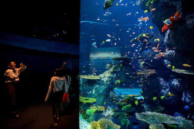 Inside the world's largest aquarium