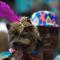 14Dogs_Carnivale.jpg