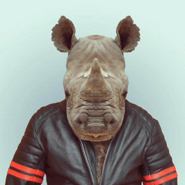 rhino_229.jpg