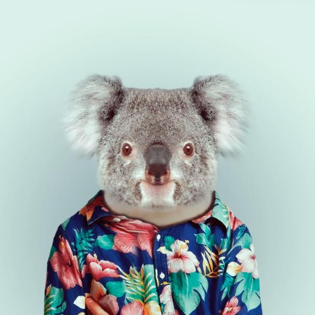 koala_629.jpg