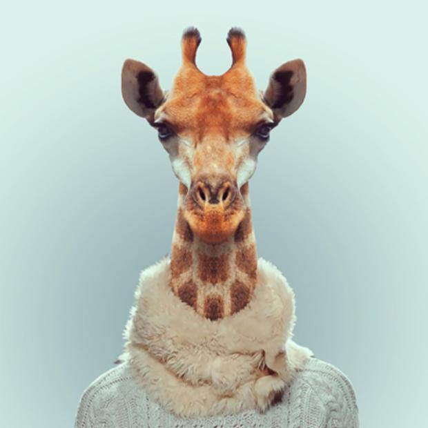 giraffe_143654044.jpg
