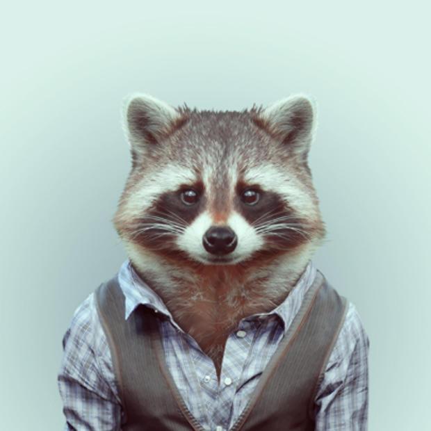 raccoon_829539.jpg