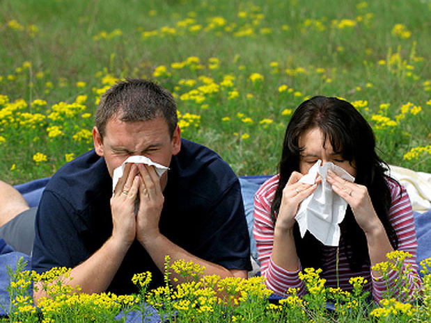 Top allergy cities of 2013