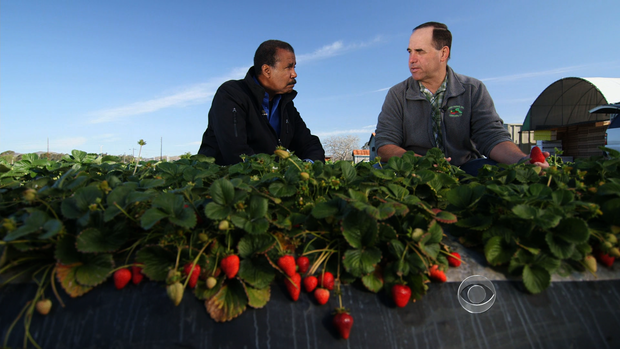 CBS News correspondent Bill Whitaker and farmer Edgar Terry on Terry's strawberry farm in Ventura, Calif.