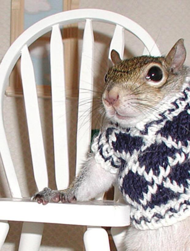 034_Sugar_Bush_Squirrel_President_of_the_Student_Council.jpg