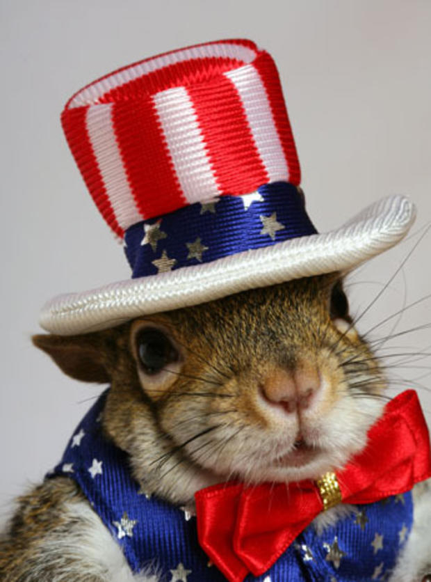 033_Sugar_Bush_Squirrel_Patriotic_(3).jpg