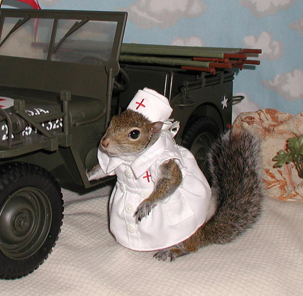 011_Sugar_Bush_Squirrel_Volunteers_with_the_Red_Cross.jpg
