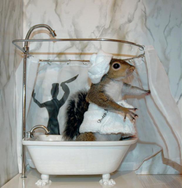 006_Psycho_Squirrel.jpg