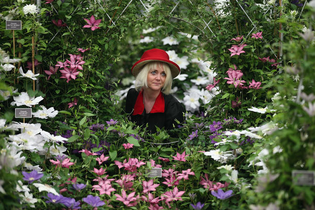 British flower show in full bloom