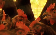 H7N9 bird flu may transmit between people