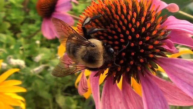 Honeybee crisis: What's killing the bees?