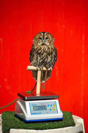 British zoo critters weigh-in