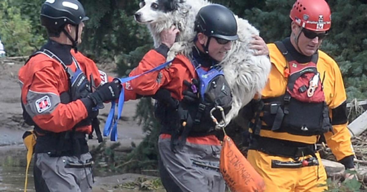 Summit County Colorado Dog Rescue