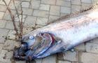 GiantFish_02.jpg