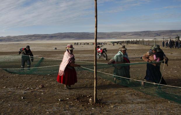 Bolivia's cash camelids
