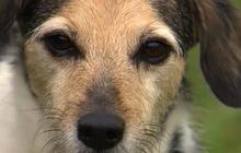 FDA eyes Chinese jerky as cause of pet illnesses