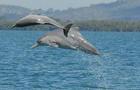 dolphin, Australia