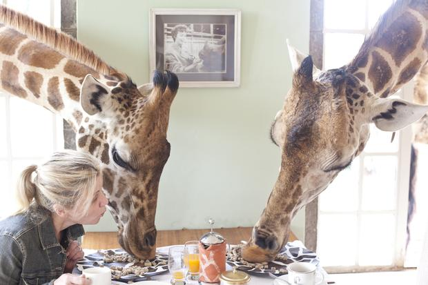 Unusual breakfast guests