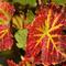 Fall_Colors_186531895.jpg