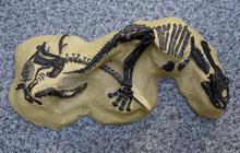 """""""Dueling Dinosaurs"""" head to auction"""