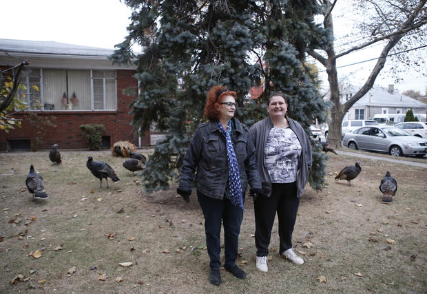 Turkeys hit the city