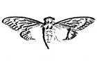 cicada-3301-website-620x442.jpg