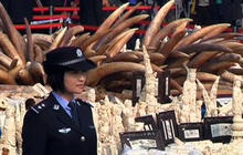 China destroys 6 tons of ivory