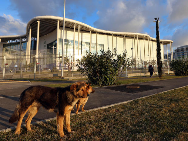 Two stray dogs stand in front of the Main Media Center for the Sochi Winter Olympics