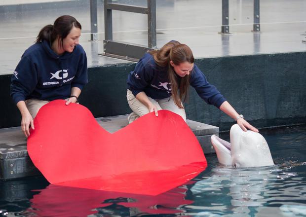 Valentine's Day at the aquarium