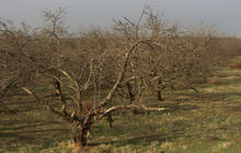 How much will federal aid help drought stricken Calif. farmers?