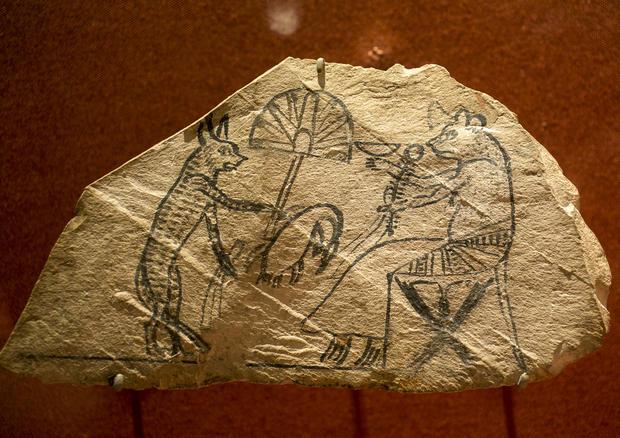 Still life: Ancient animal mummies