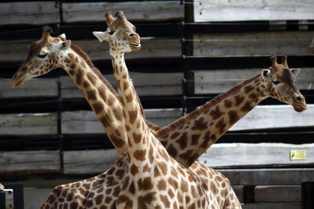 Paris zoo reopens