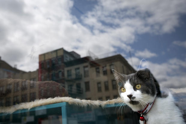 New York's purrrfect new cafe