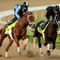 kentucky-derby-danza-and-vinceremos-487090783.jpg