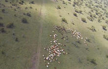 Drones used to track and protect animals from poaching