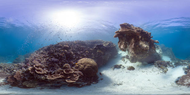 heron-island00600534.jpg