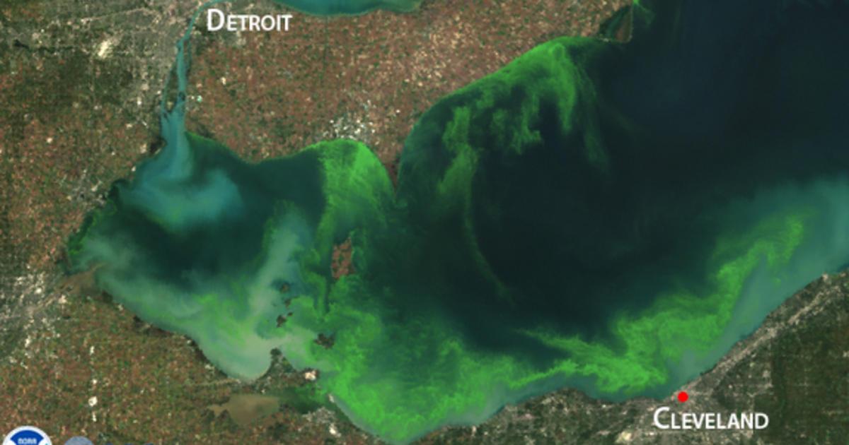 erie-algae.jpg