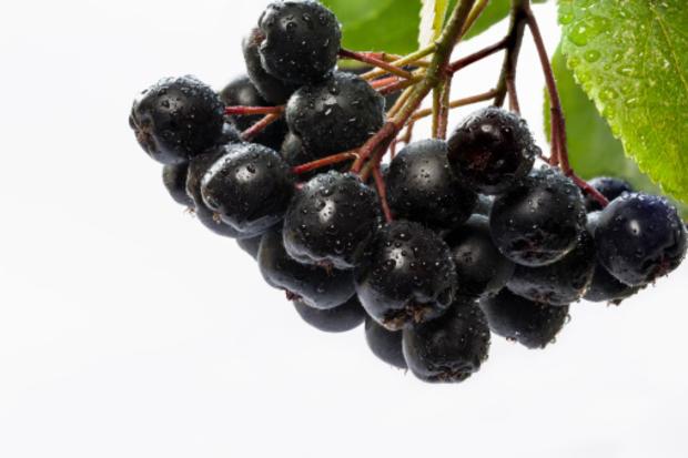 aroniaberry.jpg
